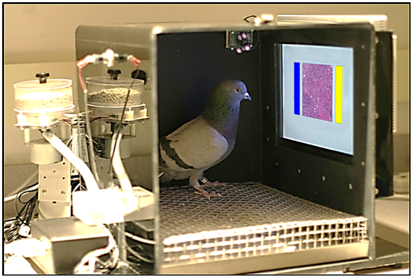 blog:bpaddock:bird_radiologist_journal_one_0141357_g001.png